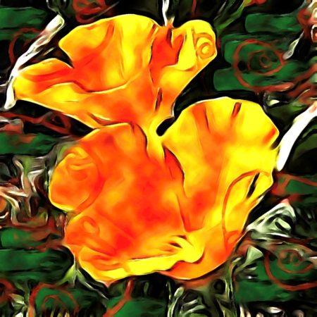 California Poppies | Inci Jones Artist